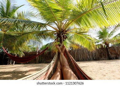 Relax in hammock under the palm tree