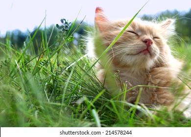 relax kitten on green grass