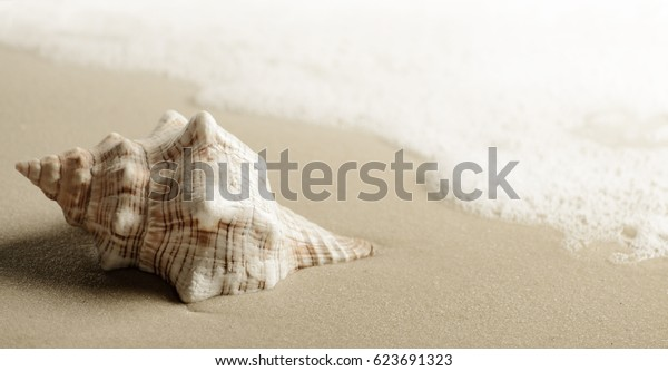 Relax summer background. Shell on the sea beach.