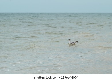 Relaxation at sea in countries with cold climates. A seagull swims on the waves of the northern, cold, azure sea or ocean. The concept of freedom and travel.