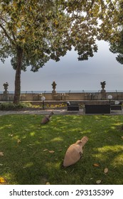 relaxation terrace with views of the alpine lake Garda