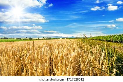 Entspannen Sie sich in einer wundervollen Spätsommer- oder Herbstlandschaft mit goldreifen Weizenfeldern, blauem Himmel, Sonne, Wolken und schönem Licht