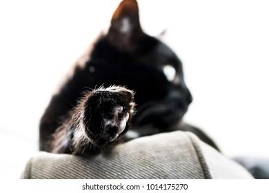 Relaxed Black Cat in Sunlight
