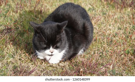 relaxed cat at the grass