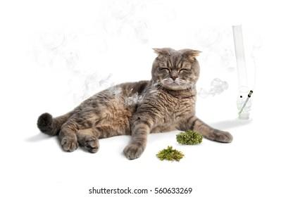 relaxed cat smokes marijuana