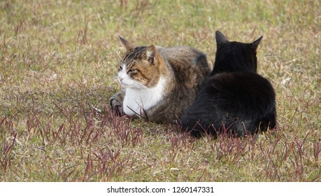 relaxed cats at the grass