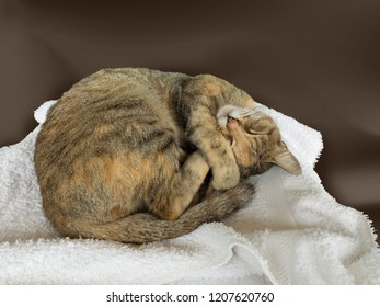 relaxed curled up cat sleeping on white towel