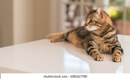 Relaxed domestic cat at home, indoor