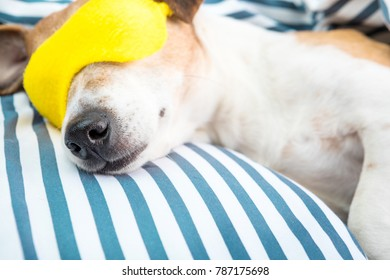 relaxed sleeping pet in cozy comfortable striped bed. Sleep well