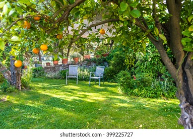 Relaxing in beautiful garden with Chairs