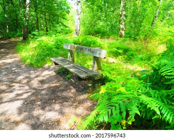 relaxing bench in green land