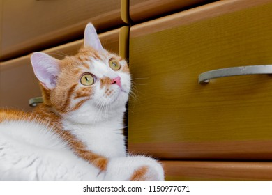 Relaxing brown white cat