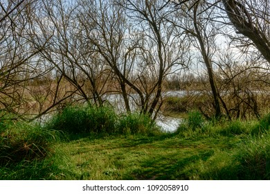 relaxing bucolic  landscape of lagoon, shot in bright spring sun light at nature oasis, Cannavie, Volano, Ferrara,  Italy