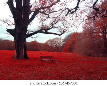 relaxing corner in red enchanted