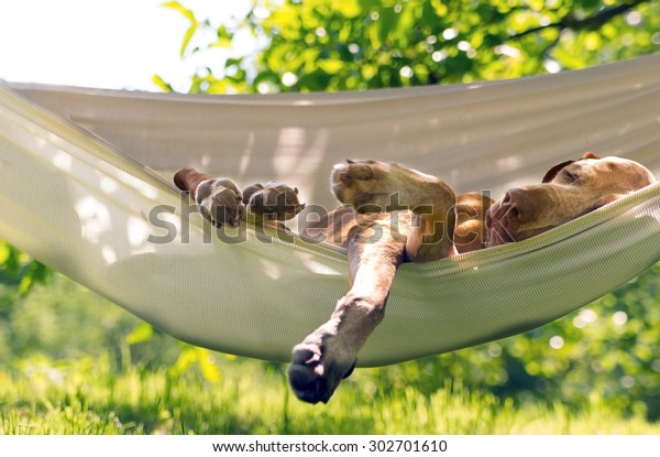 Relaxhund