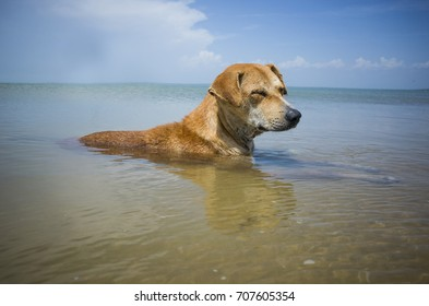 relaxing dog on the sea