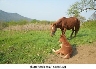 Relaxing horse