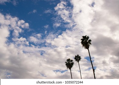 relaxing palm trees