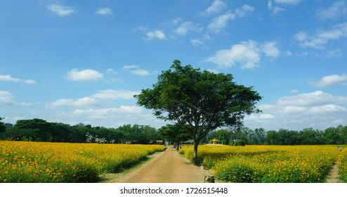 a relaxing walk in the nature under the sun