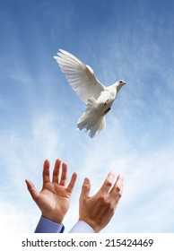 Releasing a white dove into the air concept for freedom, peace and spirituality