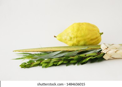 religion image of Jewish festival of Sukkot. Traditional symbols (The four species): Etrog, lulav, hadas, arava. white background