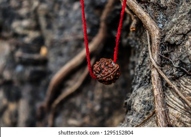 Religion Rudraksh with tree background image
