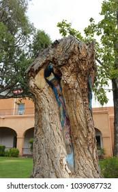 Religious carving in tree, Albuquerque, New Mexico