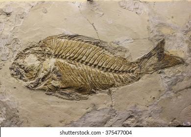 reliquiae fish printed on stone