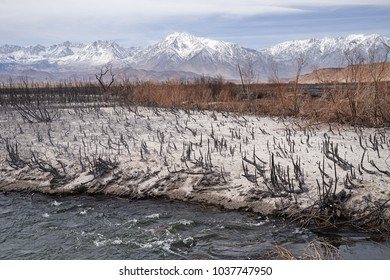 remains after the Pleasant Fire in the Owens Valley burned along the Owens River