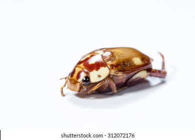 The remains of beetles