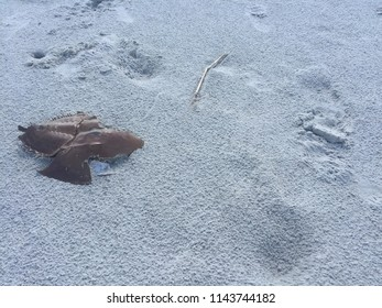 The remains of a horseshoe crab lay upon the white sand of a barrier island off the coast of Georgia showing how all things return to the earth.