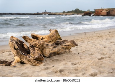 The remains of a tree lying on the sand. Seashore. The snag is lying on the ground. Old rotten wood. The texture of a tree destroyed by time. Wooden pieces lie near the reservoir. Wood debris.