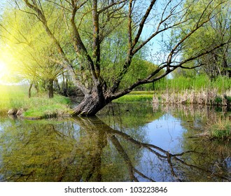 The remarkable landscape is with a lake and old willow