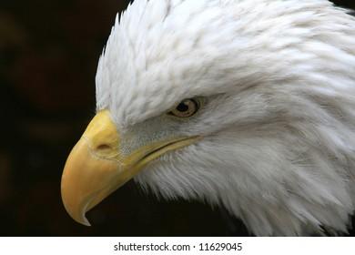 Remeber 9-11 American Eagle