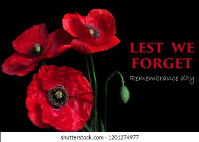 Remembrance Day greeting card. Beautiful red poppy flower on black background with lettering