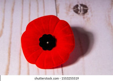 Remembrance Day Poppy Flower with a wooden Background
