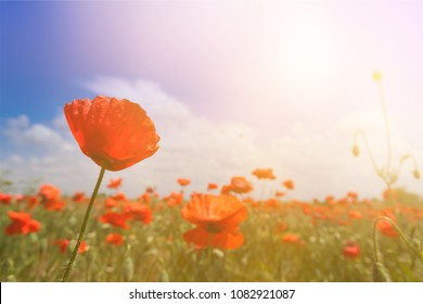 The remembrance poppy - poppy appeal