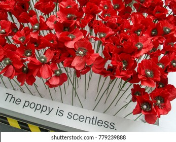 Poppy flower remembrance day white background stock illustration the remembrance poppy is an artificail flower to commemorate military personnel who have died in war mightylinksfo