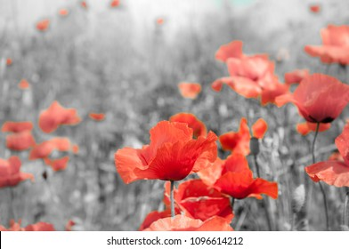 "The remembrance poppy was inspired by the World War I poem ""In Flanders Fields"""