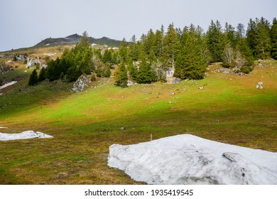 Remnants of melting snow in spring in the green hills surrounding the village of Stoos (Central Switzerland).
