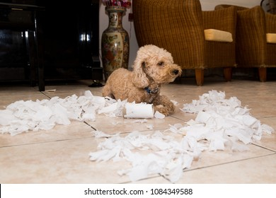 Remorseful, naughty and bored dog destroyed tissue roll into pieces when home alone