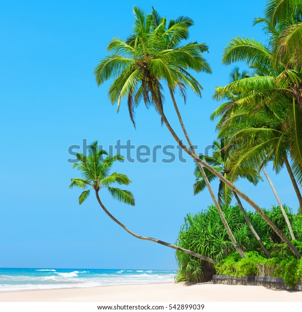 Remote island beach resort with coconut palm trees white sand and perfectly clear blue sky