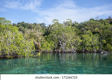 A remote island in Raja Ampat, Indonesia is fringed by mangrove forest. Mangroves serve as nurseries for many marine species. This region is extremely diverse both above and below the waterline.