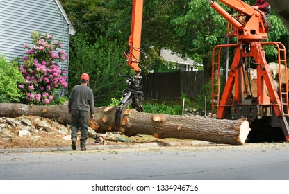 removed tree trunk by crane in residential area