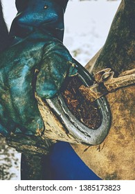 Removing hoof shoes. Blacksmith is getting of worn out horseshoes and clearing hoofs. Farm life in traditional village