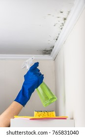 Removing mold from the living accommodation with cleaning substance. Hand in blue rubber glove spraying anti-fungus liquid on mould formation on living room ceiling