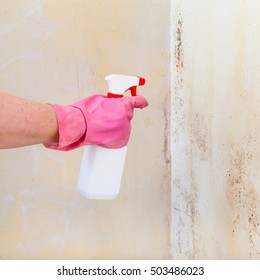 removing of mold from room wall with chemical liquid spray