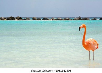 Renaissance Island Flamingo Beach Aruba