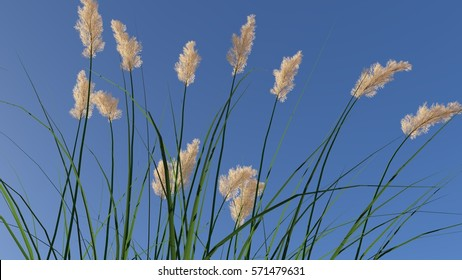 Rendered ryegrass in front of blue sky