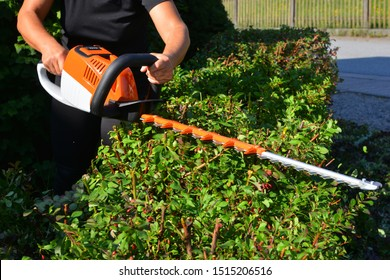 Reneval Pruning of a Garden Hedge of Barberry by a Lithium Ion Accumulator Hedge Trimmer
